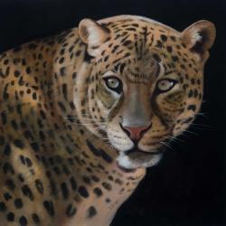 Realistic fierce leopard