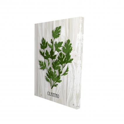 Cilantro on wood