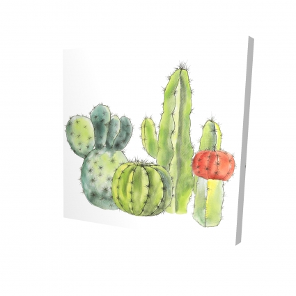 Gathering of small cactus