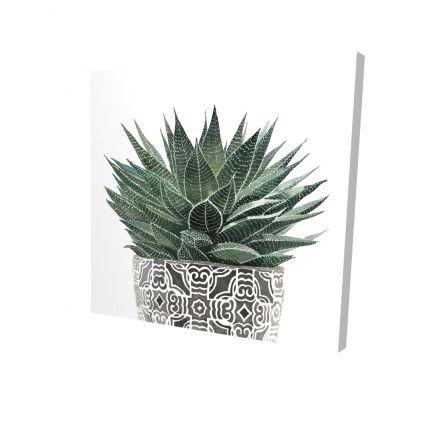 Zebra plant succulent